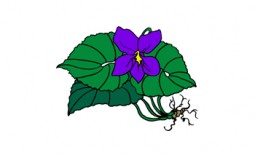 Photo of Wild Violet Natural Specialties